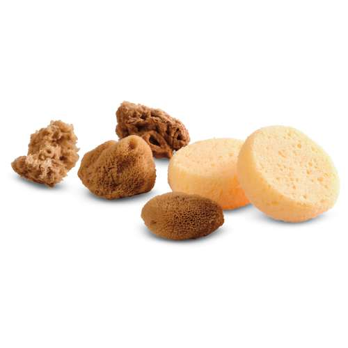Royal & Langnickel Set of 6 Synthetic / Natural Sponges