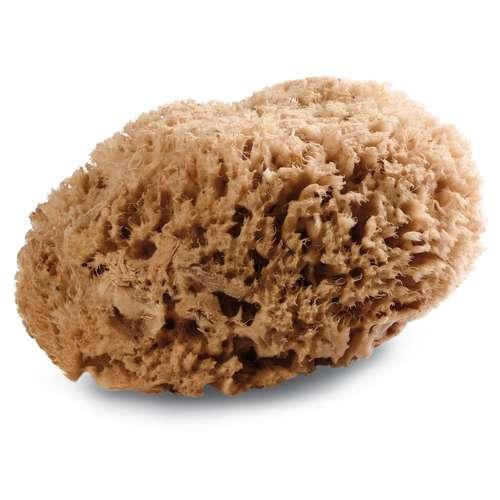 Royal & Langnickel Wool Sponge